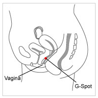 Gallery sex lingerie