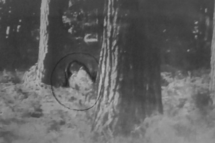 Naked tree hugger