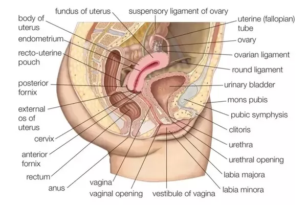 Vaginal itching cause