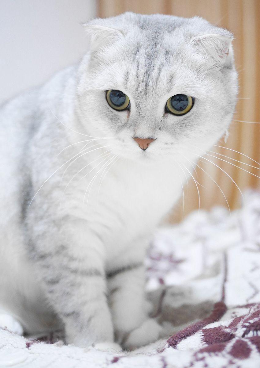cougar tumblr