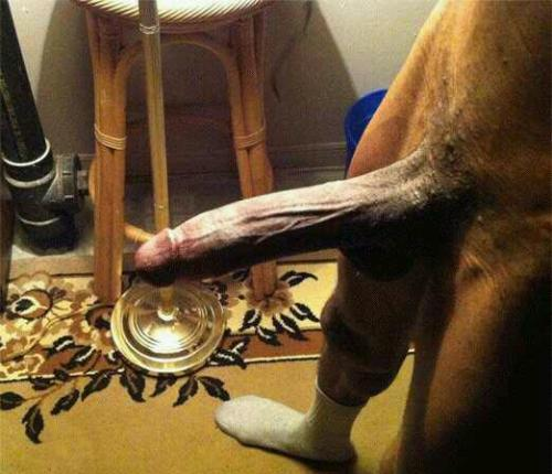 Big shaved cock pissing